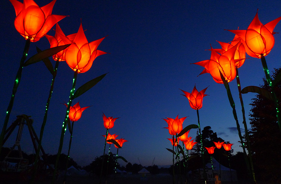 Giant Illuminated Tulips