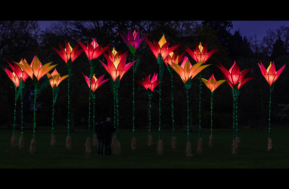 Illuminated Red Flowers at Wisley